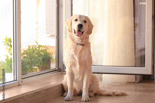 Cute dog near open window at home Canvas