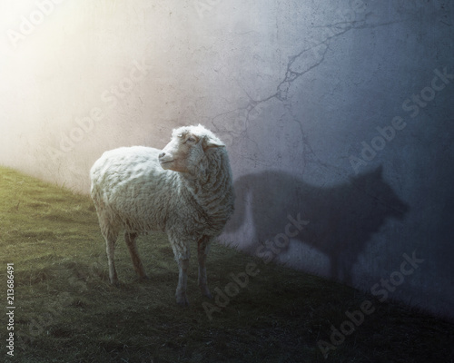 Sheep and wolf Fototapet