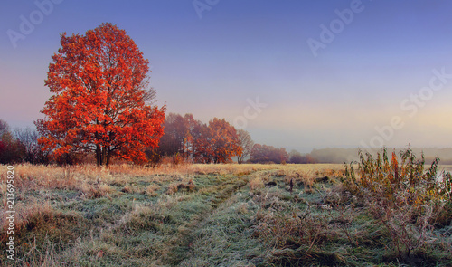 Foto op Canvas Herfst Autumn nature landscape. Colorful red foliage on branches of tree at meadow with hoarfrost on grass in the morning. Panoramic view on scenic nature at fall. Perfect morning at outdoor in november