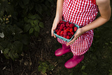 Low Section Of Girl Holding Harvested Raspberries In Container