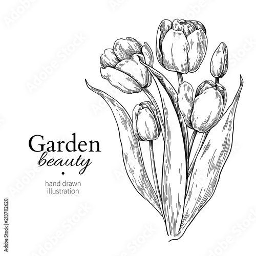 Canvas Print Tulip flower and leaves bouquet drawing Vector hand drawn engraved floral illust