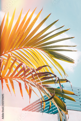 Light green palm leaves against turquoise sky. Pastel colors, creative colorful minimalism. Copy space for text