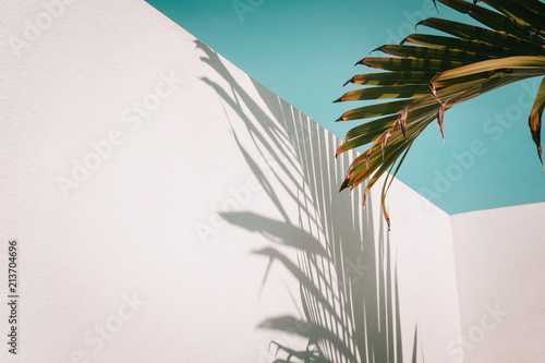 Foto op Plexiglas Palm boom Palm tree leaves against turquoise sky and white wall. Pastel colors, creative colorful minimalism. Copy space for text