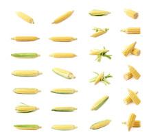 Ear Of Corn Corncob Isolated