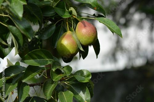 Młode owoce