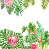 Watercolor background with tropical plants and flowers - 213709646