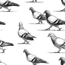 Vector Pattern Of Walking Urban Pigeons