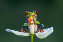 The Cutest Frog In The World. ...