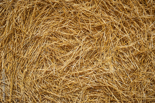 Fotografia Dry golden yellow straw grass background texture after havesting
