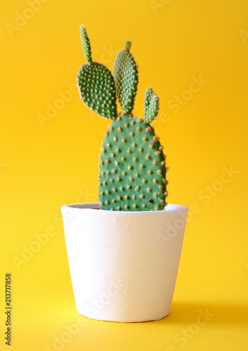 Foto Bunny ears cactus in a white planter isolated on a bright yellow background