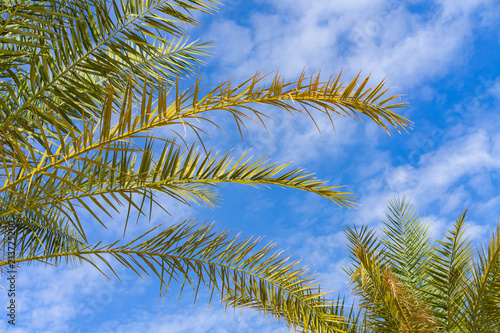 Poster Palmier Green trees in front of a blue sky with fluffy clouds