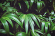 Big leaves dark toned background image taken in tropical forest of Hawaii