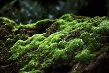 Beautiful Green Mosses On The ...