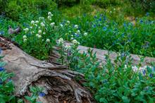Logs Flowers Blue