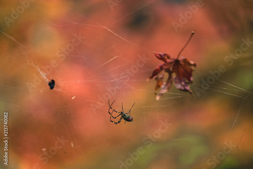 Plakat Zbliżenie przerażający pająk czeka zdobycza zdobycz w spiderweb