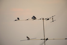 Bird Standing On TV Antenna