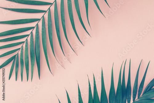 Palm leaves over pink background. Trend vintage toned.