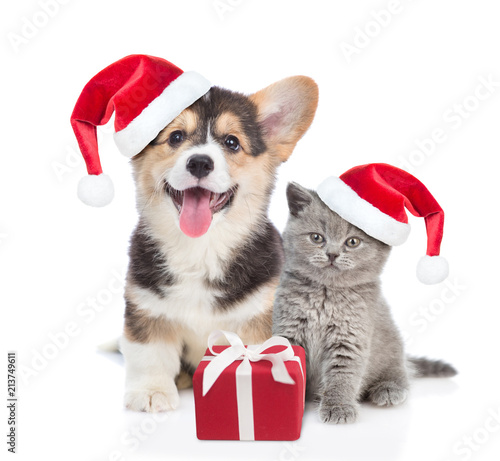 81ccbbfe8c5 Pembroke Welsh Corgi puppy and kitten in red christmas hats sitting with  gift box. isolated on white background