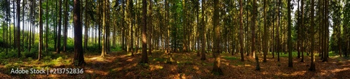 Foto op Plexiglas Bos view in the forest panorama with trees