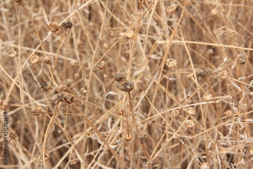 Fotografie, Obraz  trockene Wiesen-Kräuter als Muster