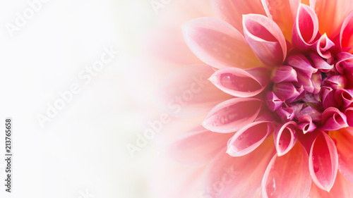 Photo sur Toile Dahlia Background or backdrop Wallpapers Dahlia Flower beautiful nature close-up Free space To enter text