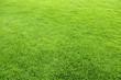 Leinwandbild Motiv 緑の芝生