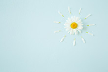 Sun Created From Beautiful, Fresh White Daisy On Pastel Blue Background. Wild Flower. Greeting Card. Mockup For Positive Idea. Empty Place For Inspirational, Emotional, Sentimental Text Or Quote.