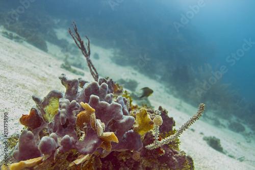 Foto op Aluminium Onder water Small part of coral reef