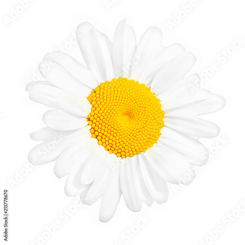 Single chamomile flower close up isolated on white background. Macro. Top view
