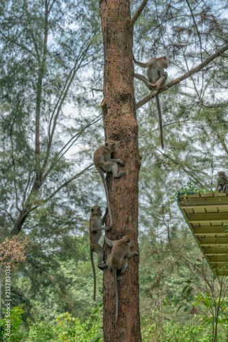 Photo  Monkeys in a tree