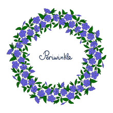 Garland With Blue Periwinkle Flowers. Element For Design Wreath Vinca. Catharanthus Blossom Pattern