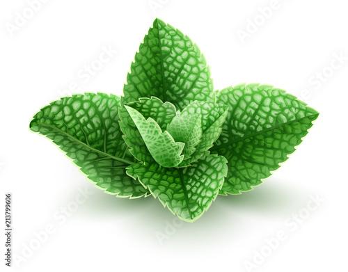 Obraz Fresh green mint leaves. Main natural organic ingredient - fototapety do salonu