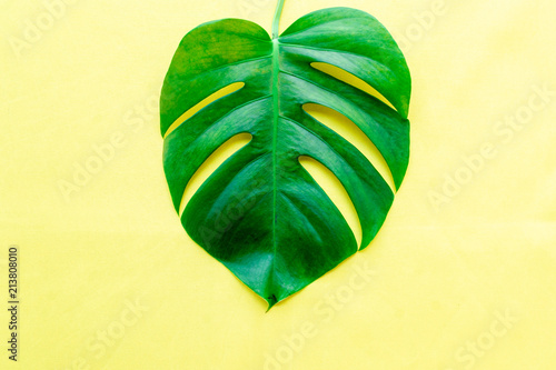 Photo Stands Candy pink Leaf of monstera philodendron plant on yellow background, flat lay.