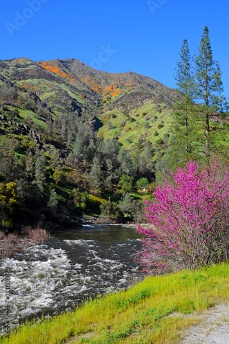 Fotobehang Bleke violet Beautiful Landscape of mountains, forests, and river in Yosemite National Park, California, United States