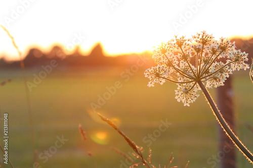 Poster Natuur duizendblad bij zonsondergang