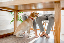 Happy Dog Sitting Under The Table With Legs Of The Couple At Home