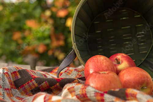 Fototapety, obrazy: red apples in fall with green basket and blanket