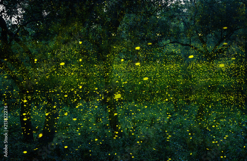 Abstract and magical image of Many firefly flying in the forest. Fireflies in the bush at night in Bangkok (Prachinburi) Thailand. Firefly symbolizes the integrity of the ecosystem.