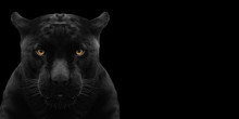 Black Panther Shot Close Up Wi...