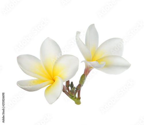 Tropical flowers frangipani (plumeria) isolated on white background Tableau sur Toile