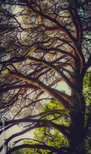 Magiczne drzewo jak z bajki