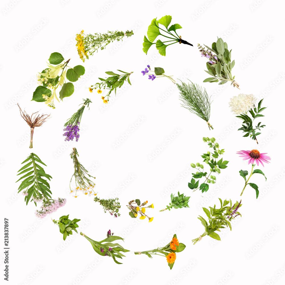 Fototapety, obrazy: Heilpflanzen, Kreise, Rahmen