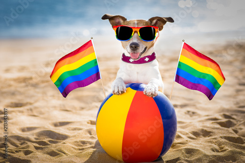 Photo gay dog relaxing on a beach