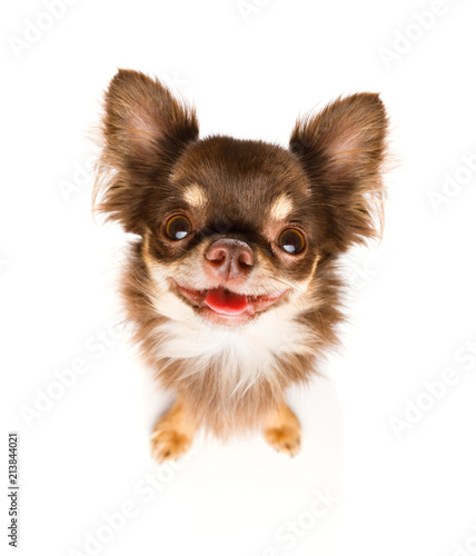 Keuken foto achterwand Crazy dog dog waits for owner