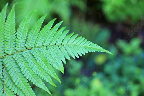 helecho en el bosque 4M0A7879-f18
