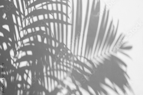 Foto op Aluminium Palm boom shadow of a palm leaf on white concrete wall