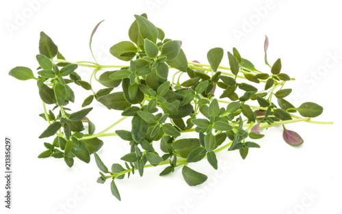 Deurstickers Aromatische Thyme fresh herb isolated on white background