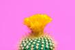 canvas print picture - Cactus tropical. Minimal Concept. Contemporary Art. Trendy Color. Creative Modern Cacti Style