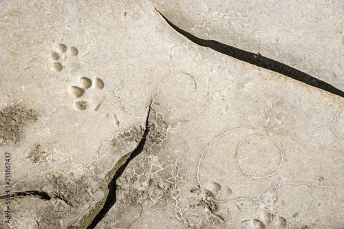 Photo  Dog footprints in cracked dry earth with abstract odd shapes