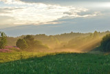 Sun rays illuminating the meadow. Nature landscape. Novgorod region, Russia. - 213867645
